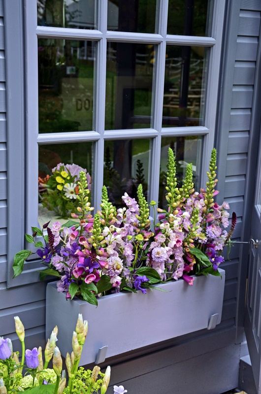Window box planted with selection of colorful flowers including scabiosa, foxgloves and phlox