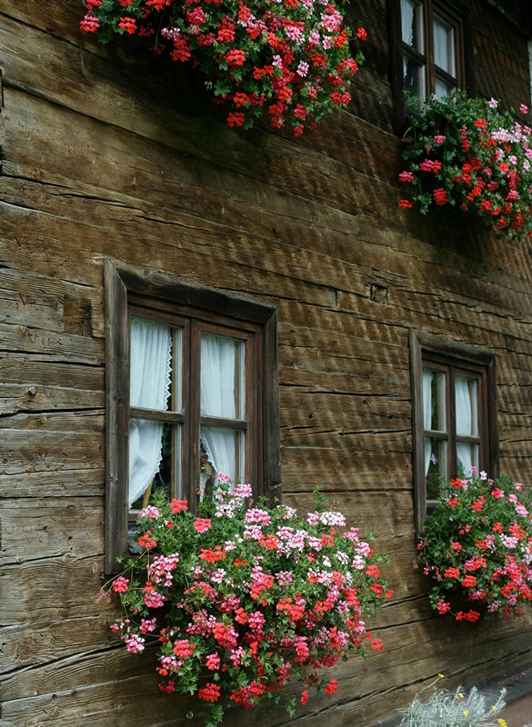 Wood House with Overflowing Flower Boxes at the Window