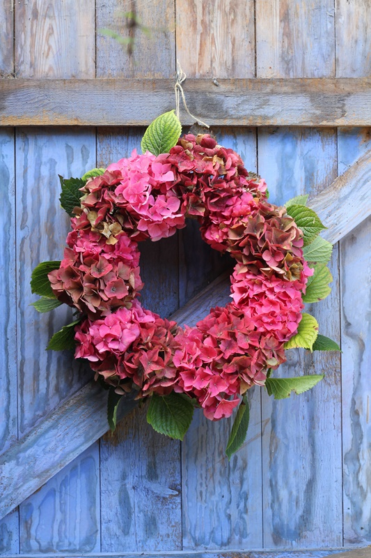 Dark Pink Hydrangea Wreath on Periwinkle Door