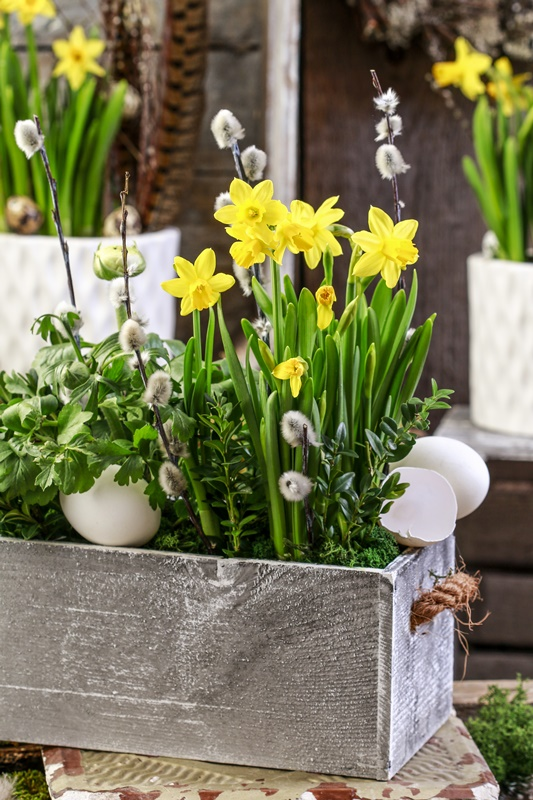 Wooden box with yellow daffodils. Party decor