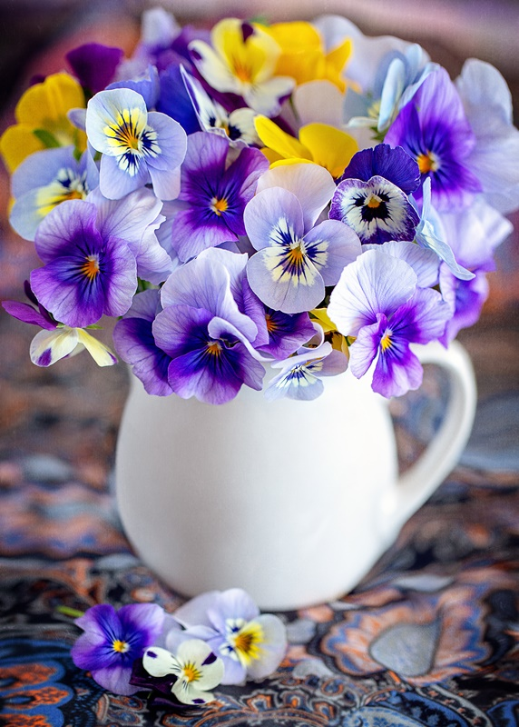 Purple and Yellow Pansies in a White Ironstone Pitcher