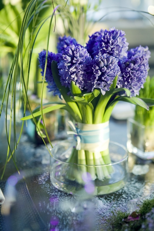 decoration of dining table.  bouquet of  purple hyacinth in glass vase
