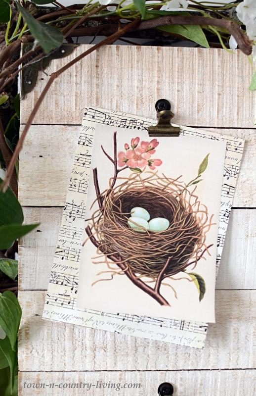 Vintage Bird Nest Printable