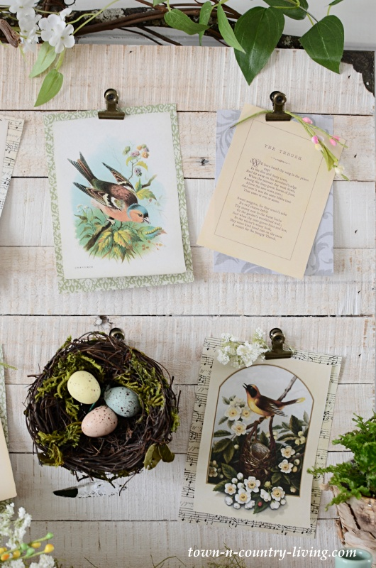 Vintage Bird Prints on a Spring Nature Board