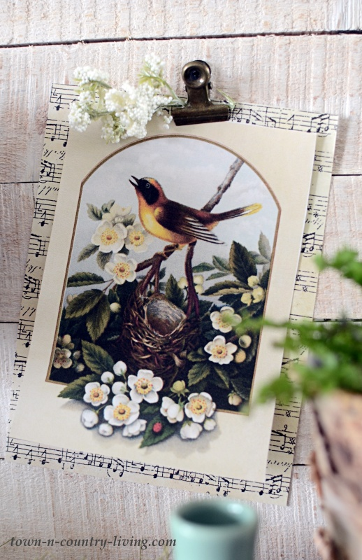 Vintage Bird Print to Download