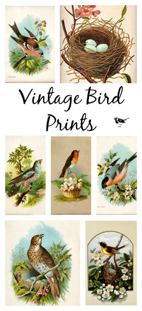 Vintage Bird Prints to Download