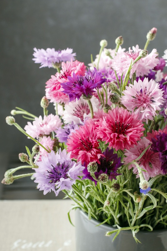 Bouquet of pink and purple cornflowers. Party decoration