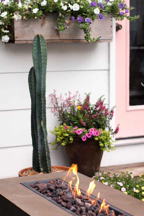 Garden pots, flower boxes, and cactus in front of she shed