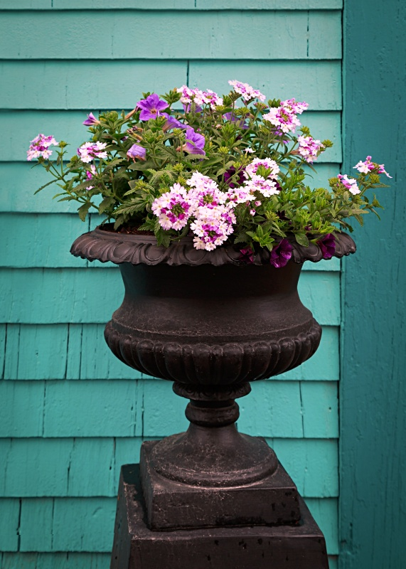 Pedestal planter with verbena and petunias against a teal colored wall.