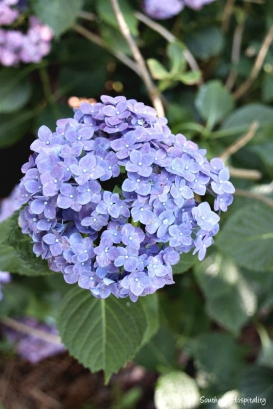 Hydrangea Tour by Southern Hospitality