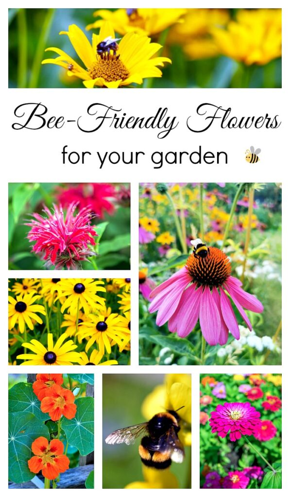 Bee-Friendly Flowers for the Garden - to help the bee population