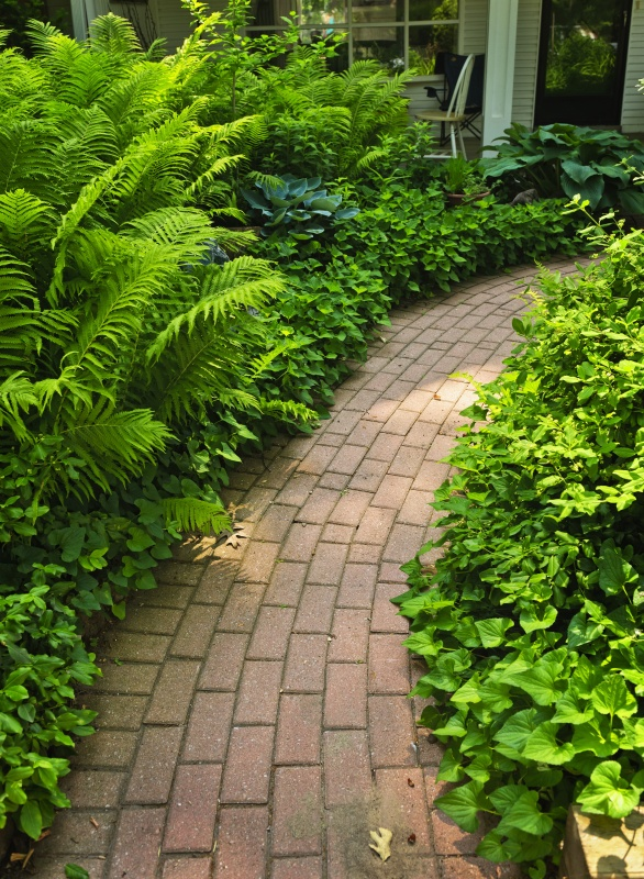 Paved brick path in lush green summer garden