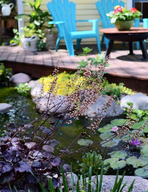 Coralbells at the Shore of Aquascape Backyard Pond