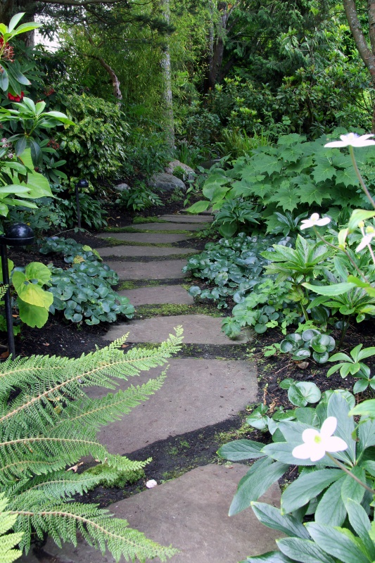 Shady garden path lined with perennials.