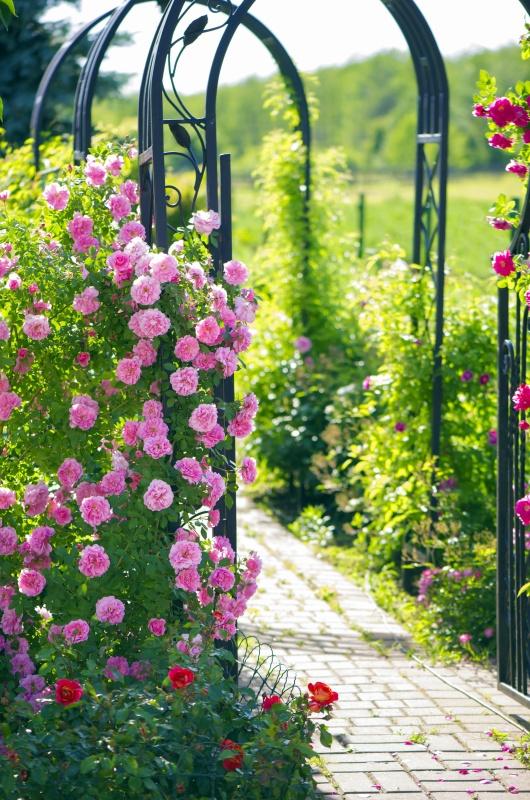 Garden Arbor with Climbing Roses
