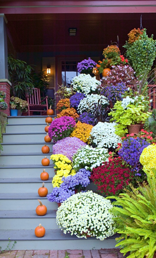 Fall mums on display on a front porch and steps