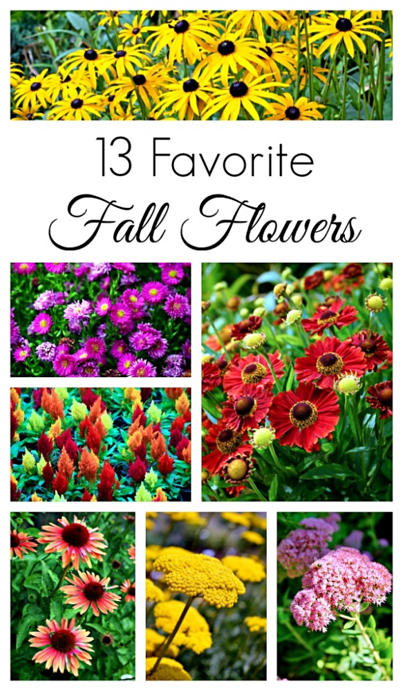 Collection of Favorite Fall Flowers