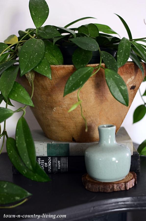 Hoya plant in Ukrainian Bread Bowl from Bloomist