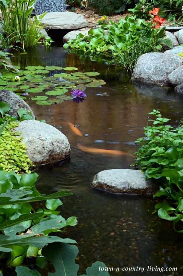 Backyard Koi Pond in the Summer