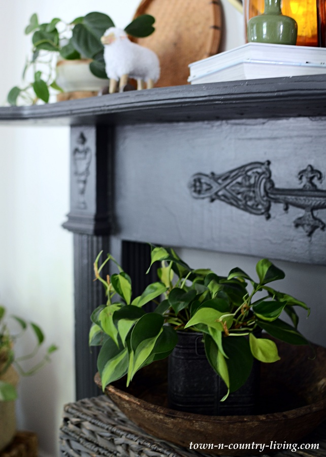 Brasil Philodendron and Transitional Mantel