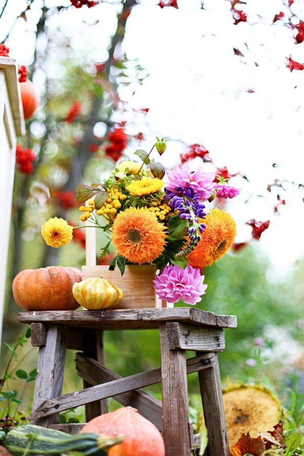 Autumn bouquet in wooden box, flowers vase on shabby rustic stool. Purple, orange, yellow bright zinnias, dahlias. Pumpkins, zucchini, rowan,vintage chair.Fall harvest