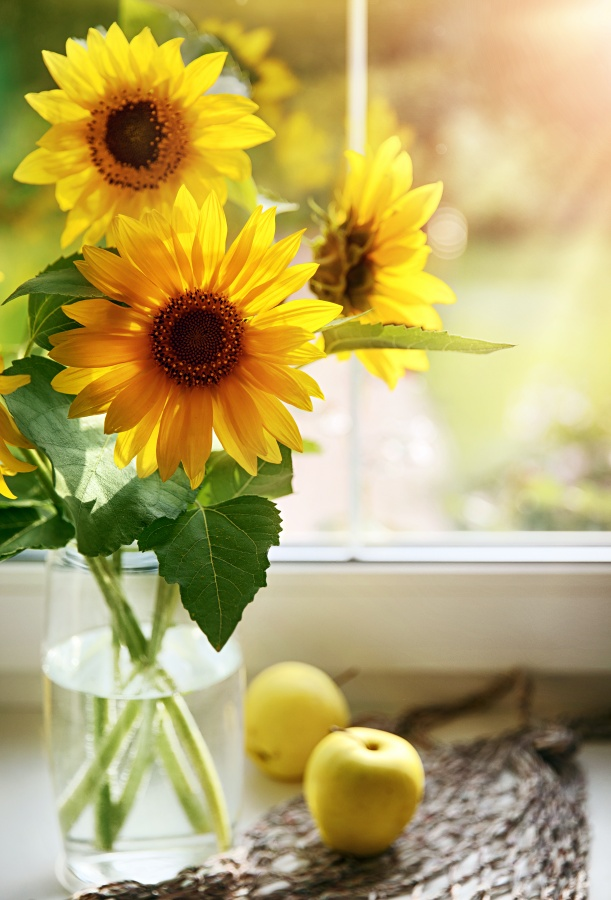 Bouquet sunflowers in glass vase at windowsill window. Still life of summer yellow flowers with apple