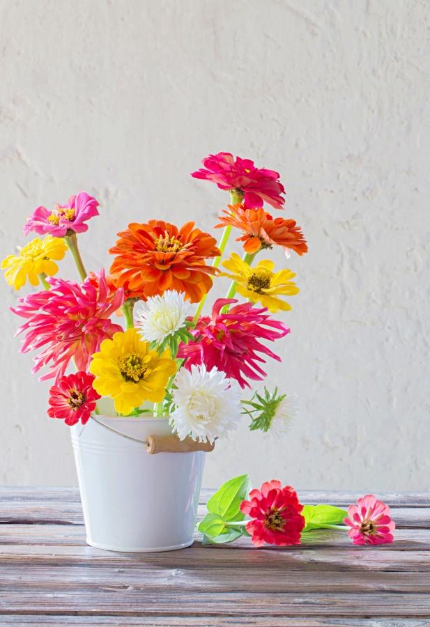 zinnia flowers in a white enamel bucket