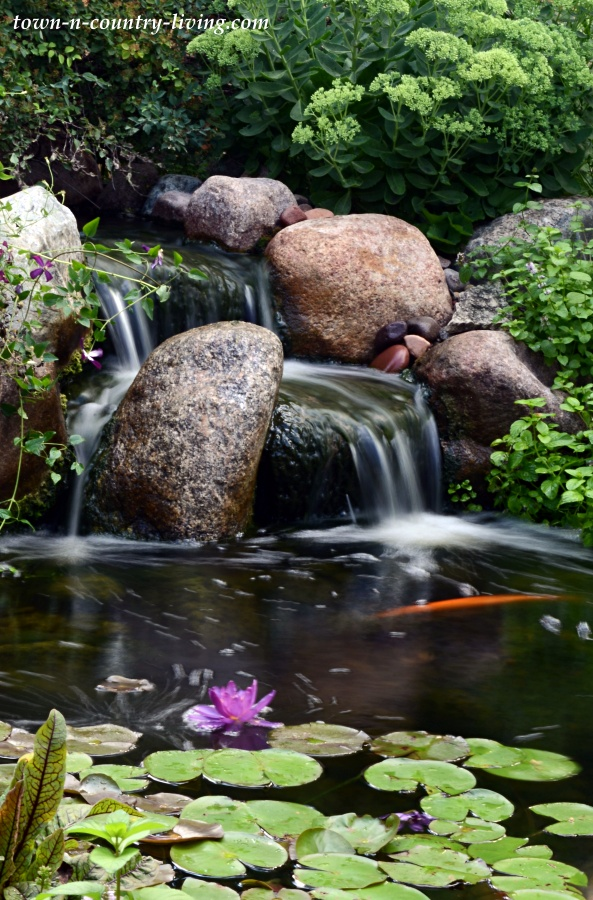 Waterfall in a Backyard Pond with Koi and Waterlilies