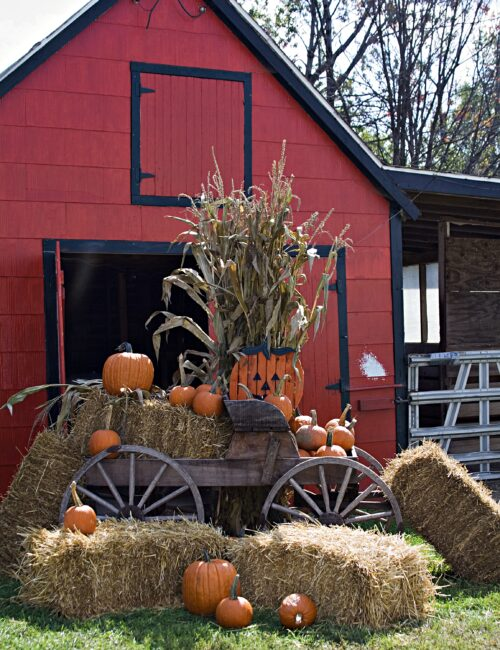 Fall scene with red barn, hay bales, and pumpkins
