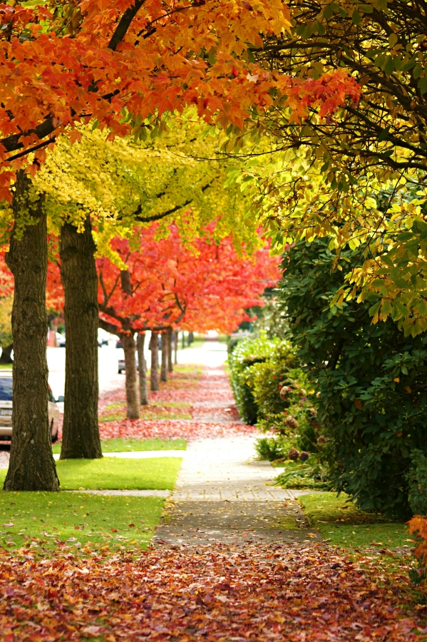 Fall Activities - Take a walk in a quiet neighborhood and enjoy the fall colors