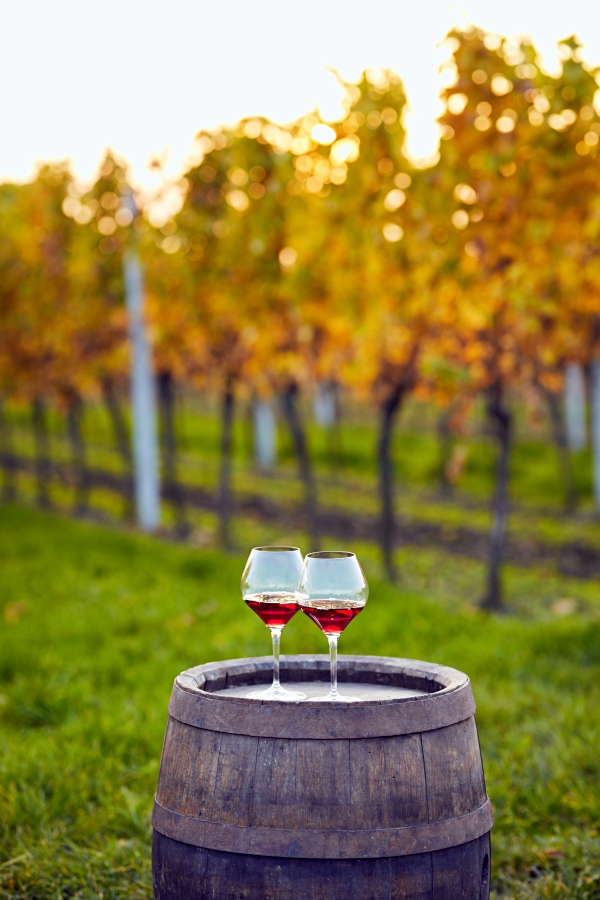 Fall Activities - visit a local winery
