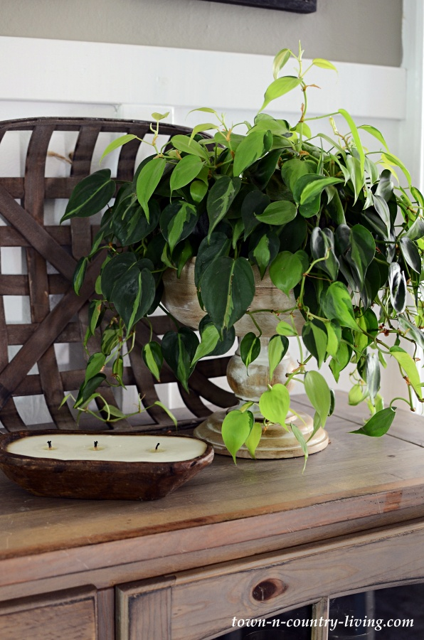 Philodendron Brazil in Footed Wooden Bowl