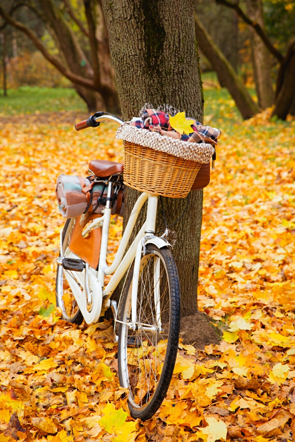 vintage bicycle with basket picnic set hot drinks in autumn park
