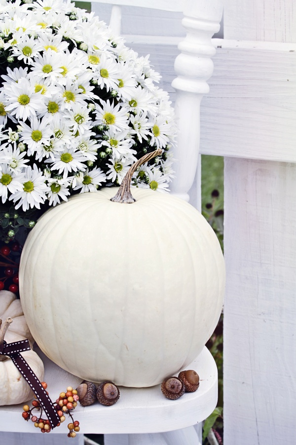 White pumpkins and mums sitting outdoors on an old white chair.