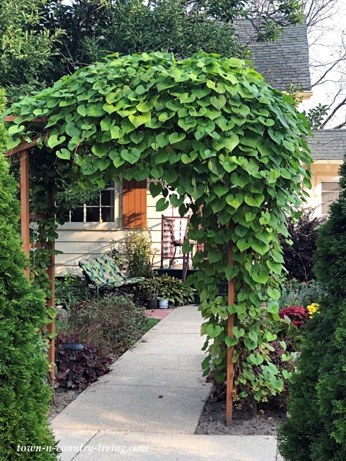 Garden Arbor at Front Sidewalk of House