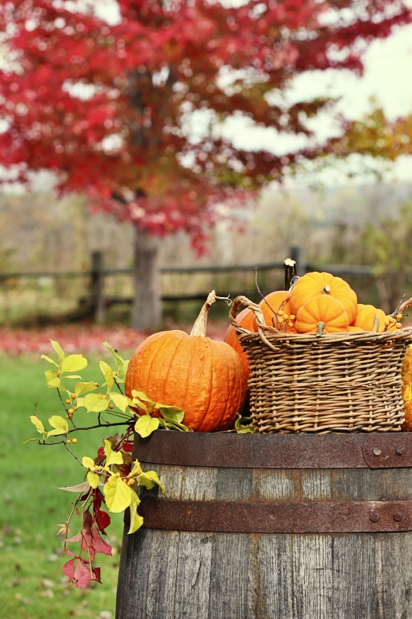 Colorful pumpkins and gourds on barrel for autumn harvest