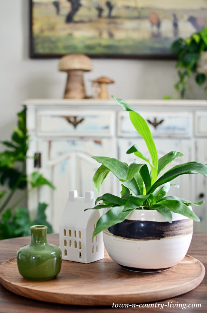 Staghorn Fern in Artisan Pot on Coffee Table in Small Sitting Room