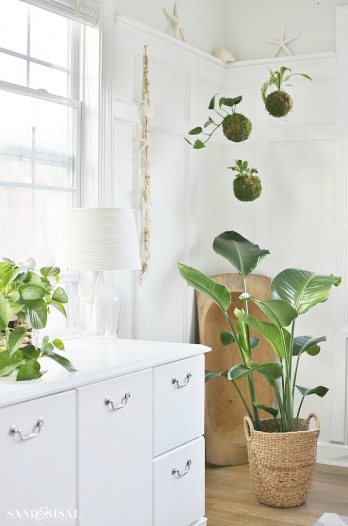 Houseplants by Sand and Sisal