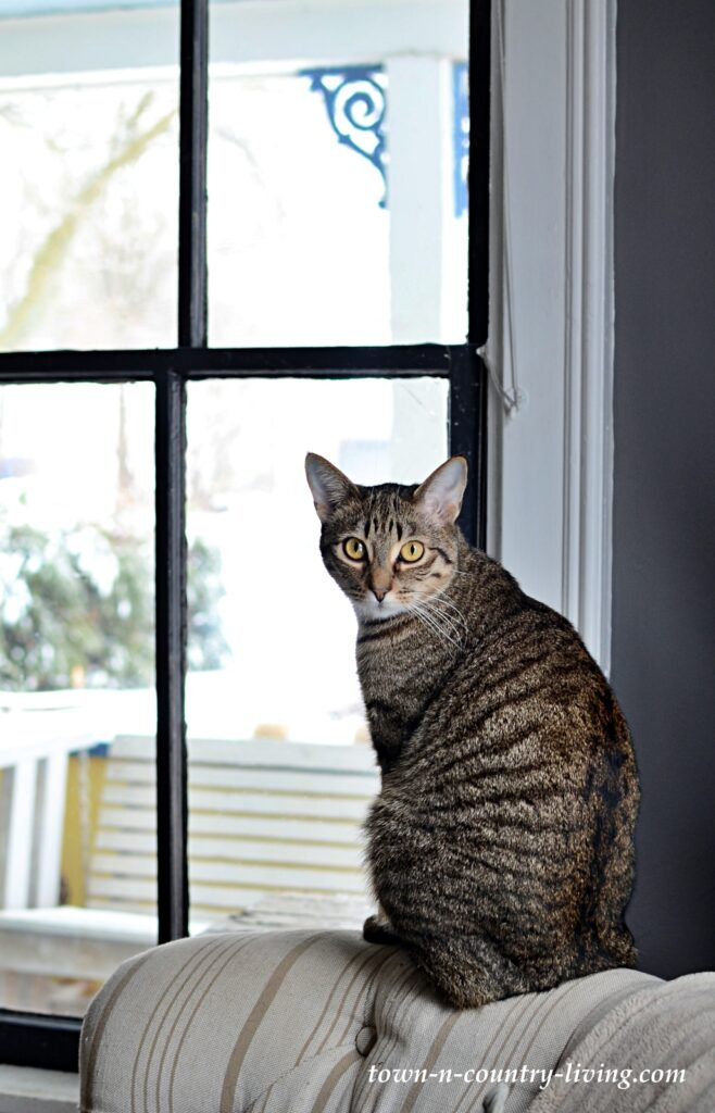 Dexter the Cat by the Window