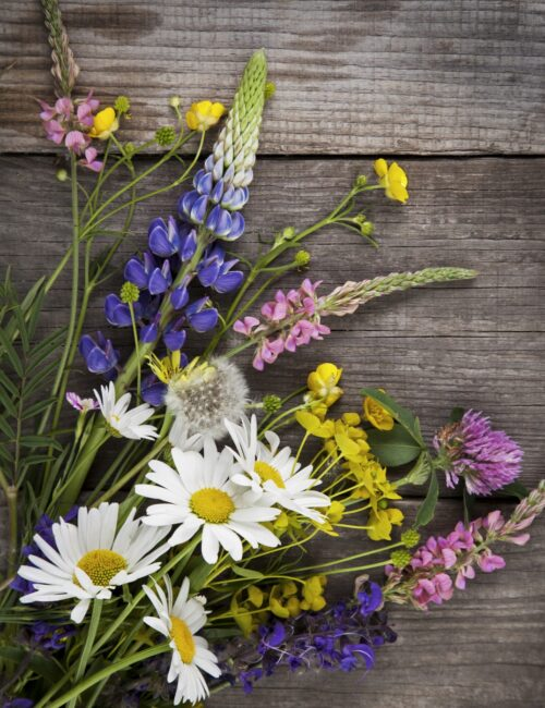 Lupine and Daisies on Rustic Boards