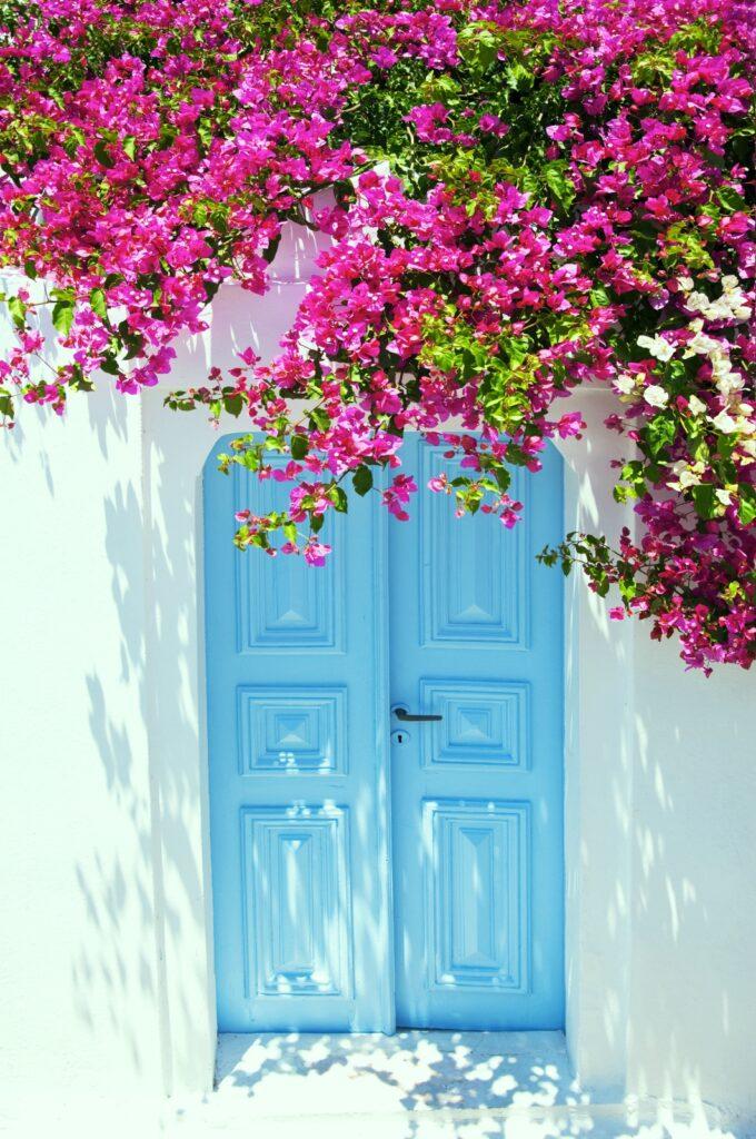 Front double doors in sky blue with pink flower arbor