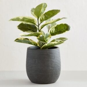 charcoal houseplant pot