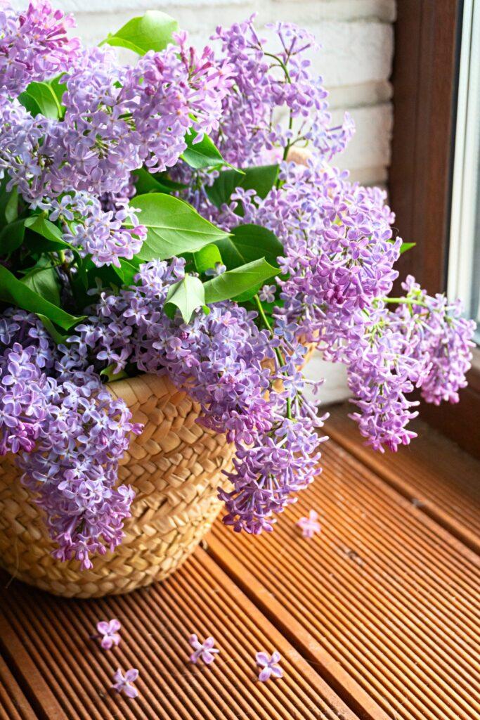 Basket of violet lilacs