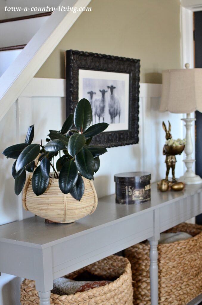 Rubber Plant in a Basket on a Dining Room Console Table