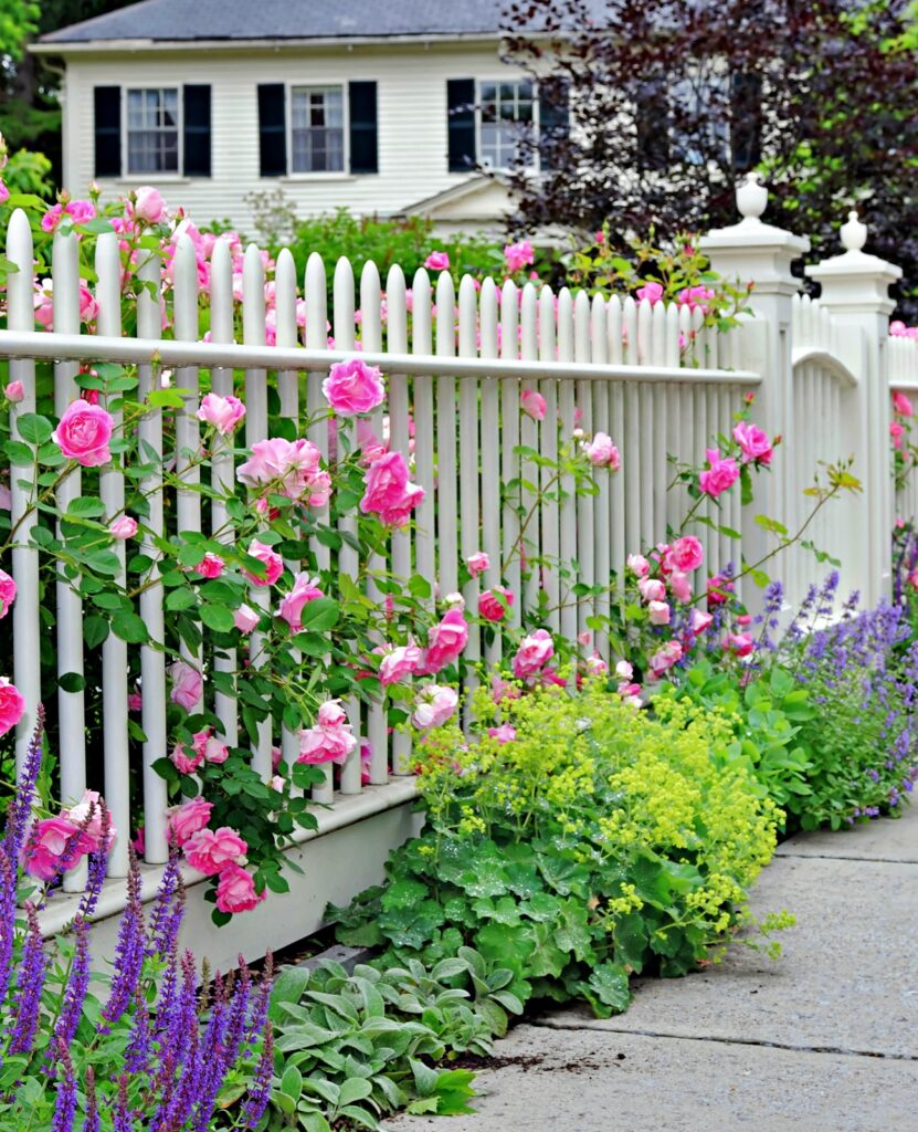 Garden fence and gate with pink roses and colorful garden border