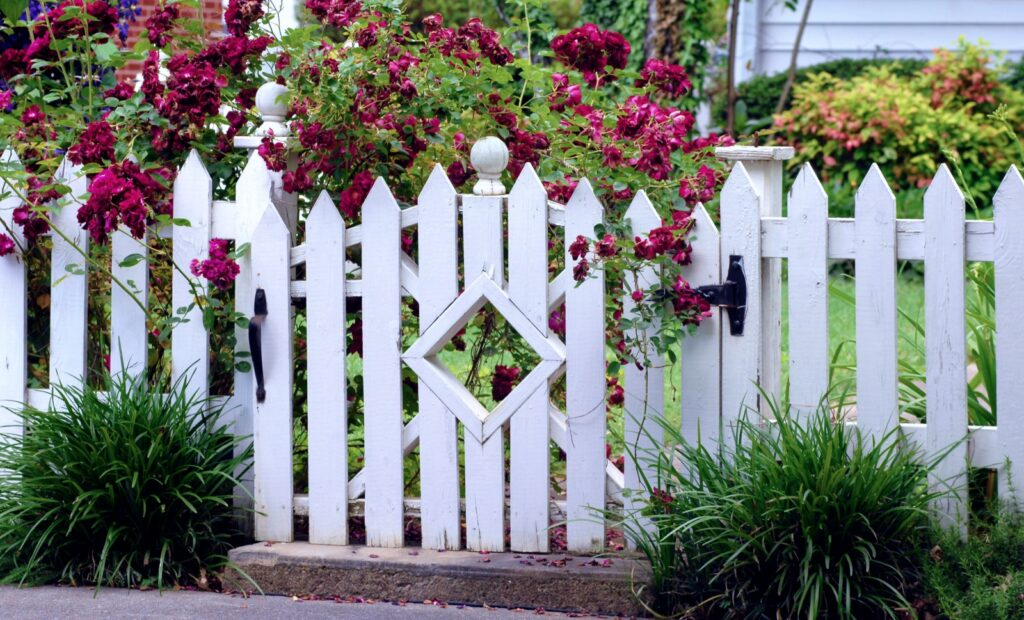 White Picket Fence with Garden Gate and Roses