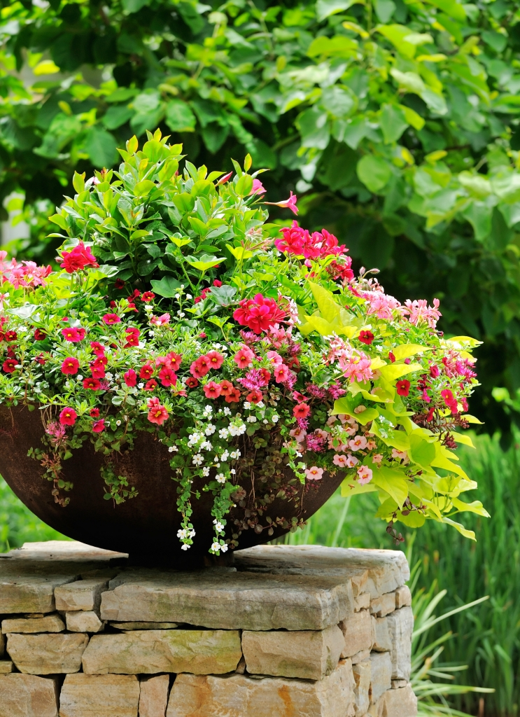 Summer Container Flower Garden on Stone Wall