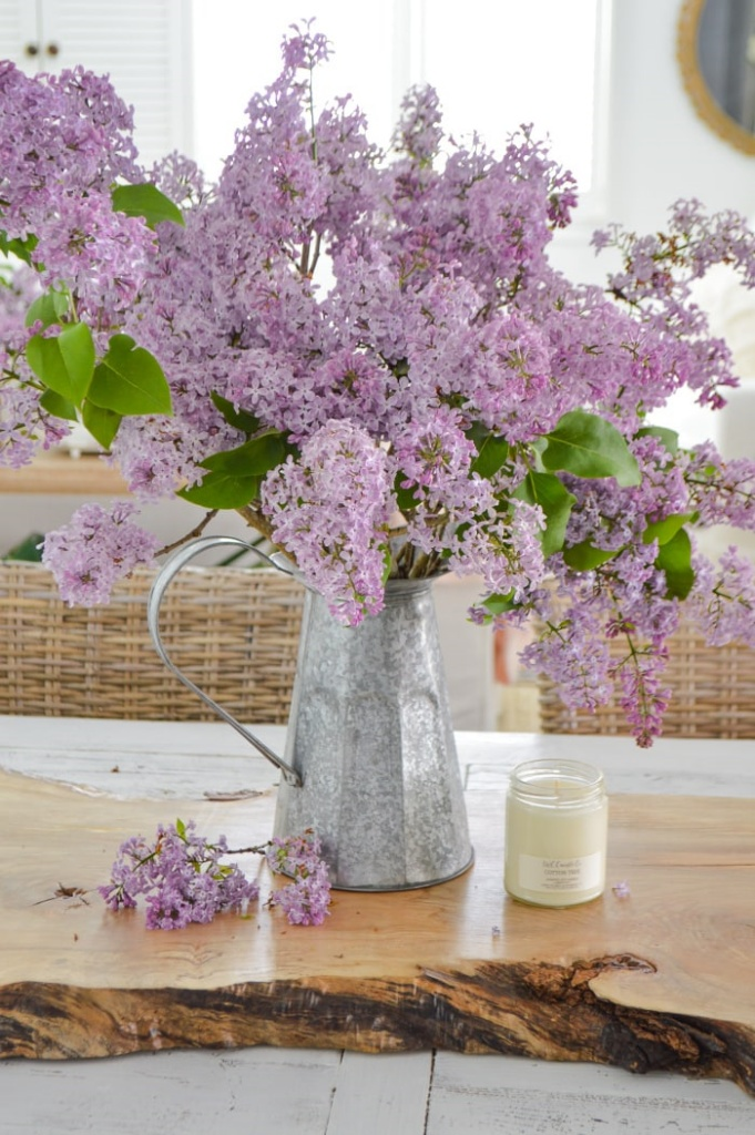 Lilacs by Fox Hollow Cottage
