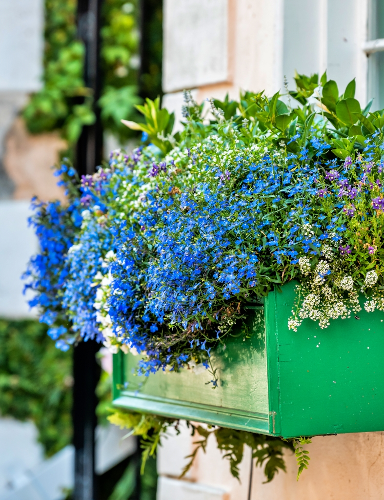 Green window flower box with blue and white dainty flowers