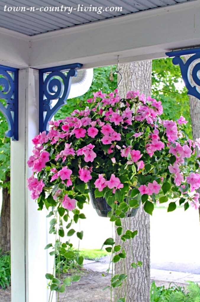 Pink Impatiens with Vines in Hanging Basket